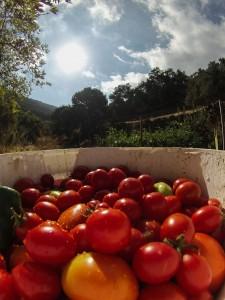 tinos-ecolodge-garden_3